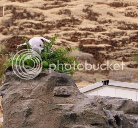 Ella enjoying a fresh fern salad.