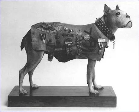 Stubby, 26th Division Mascot (1/6)