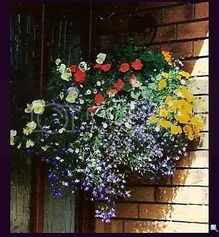My Hanging Flower Basket