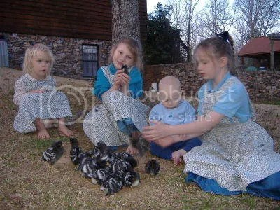 Abigail, Mary, Elizabeth and Benjamin playing with chicks