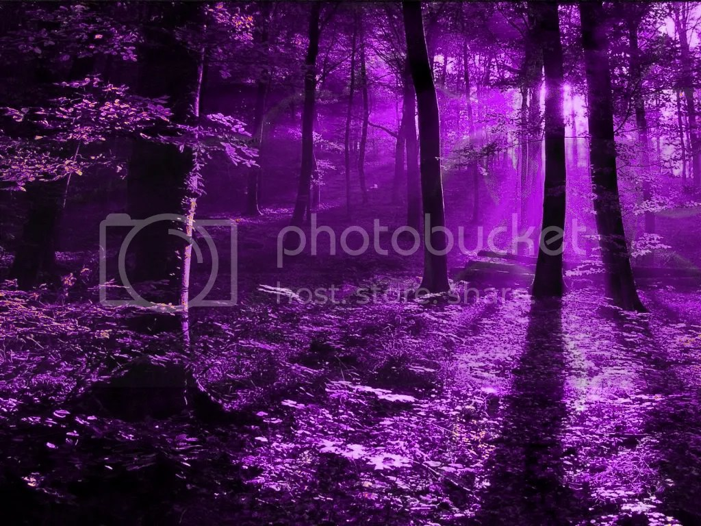 Purple forest Image