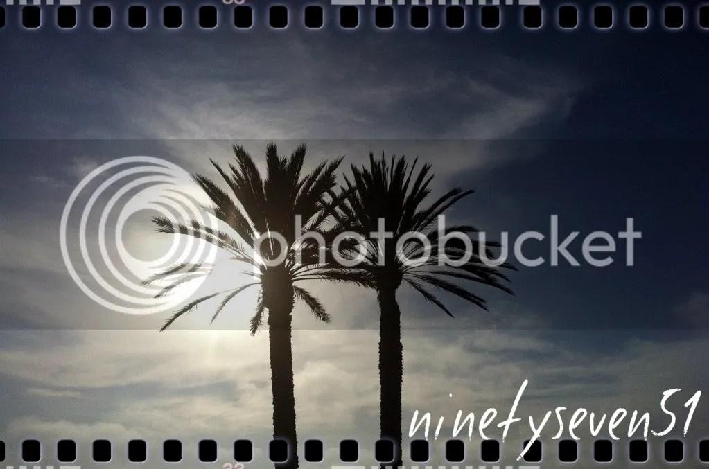 IMG_3047 - palms