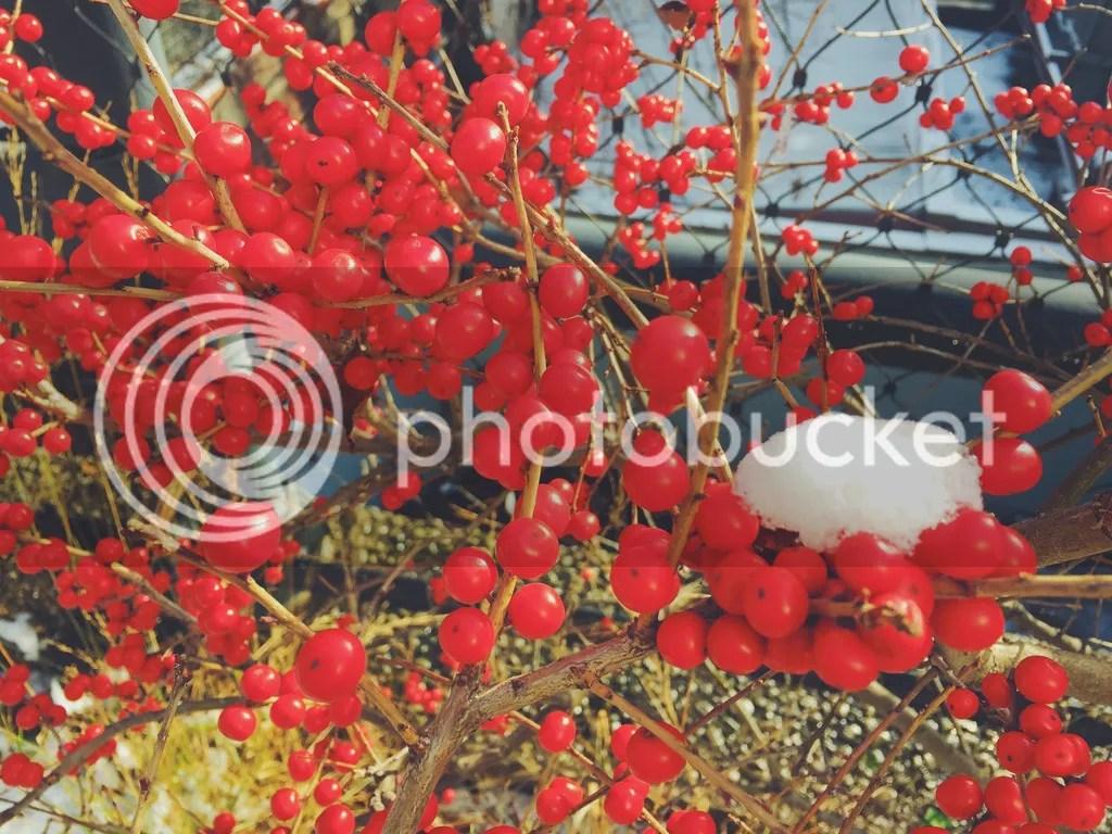 photo High Line berries_zpsq5kjqxcs.jpg