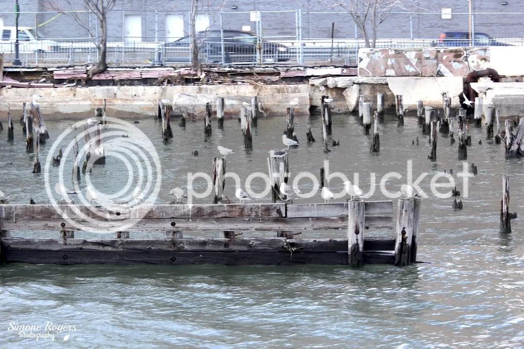 photo seagulls_zpspqojhiyc.jpg