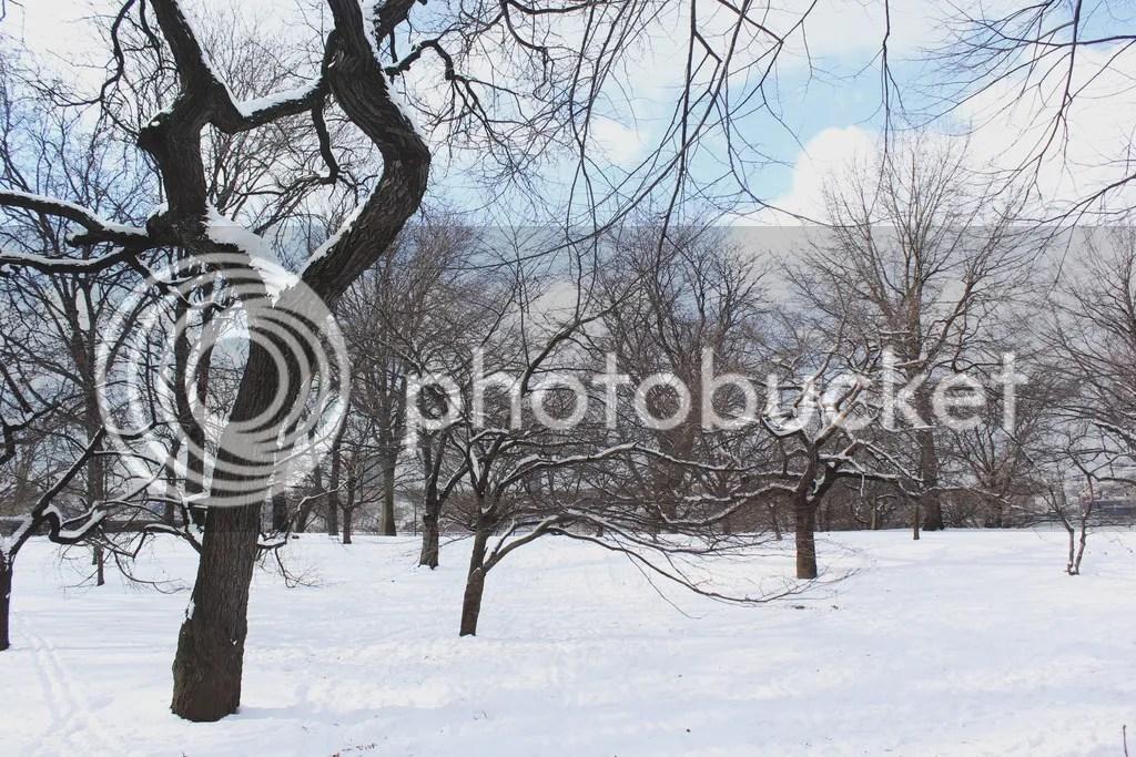 photo winterinnewyork_zpsfooeku54.jpg
