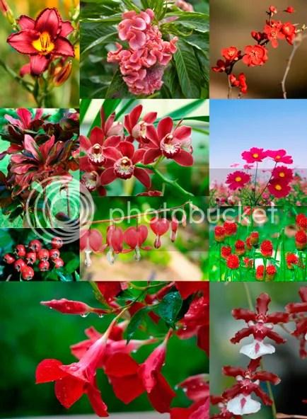 Plantas-Marsala