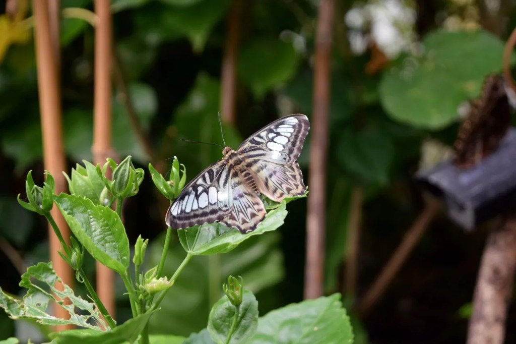 Butterfly at London Zoo