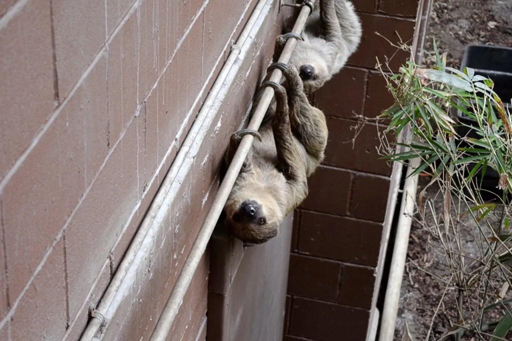 Sloths at London Zoo | The LDN Diaries