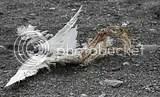 photo dead bird 01_zpsloeoawgc.jpg