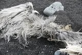 photo dead bird 03_zpsonefnsmf.jpg