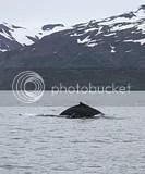 photo whales 02_zpsg9c1m4ey.jpg
