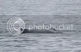photo whales 06_zpszgxpkntw.jpg