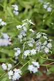 photo blue flowers iceland 01_zps5nd2zrdh.jpg