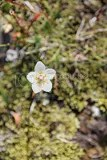 photo glacier flower_zps9exsnk7h.jpg