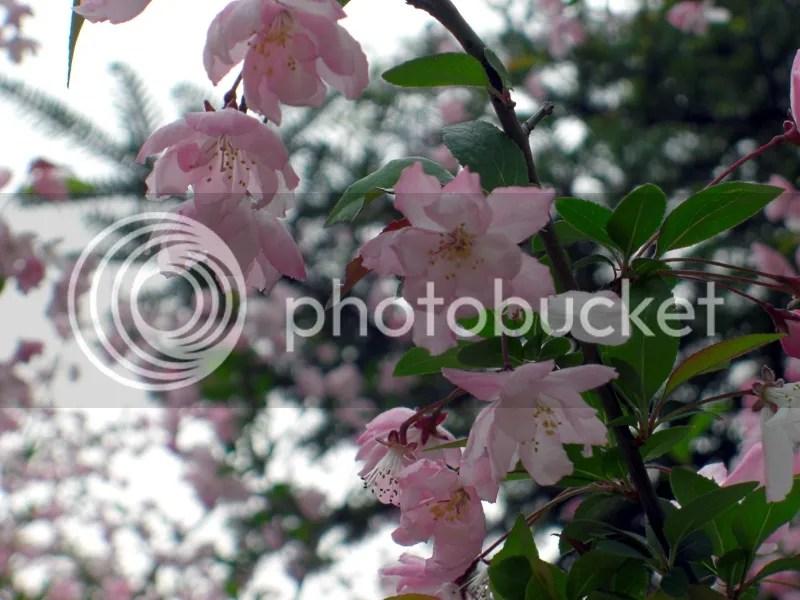 photo CIMG5173s_zpsc439160b.jpg