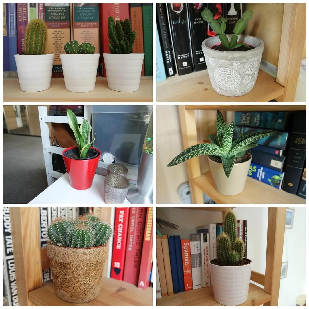 Plants: succulents & cactus