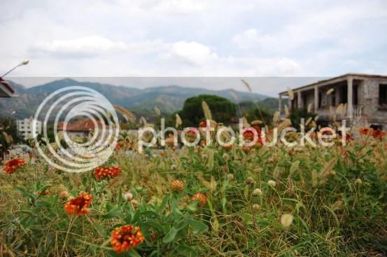 Flowers in Permet