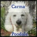 Carma Poodale