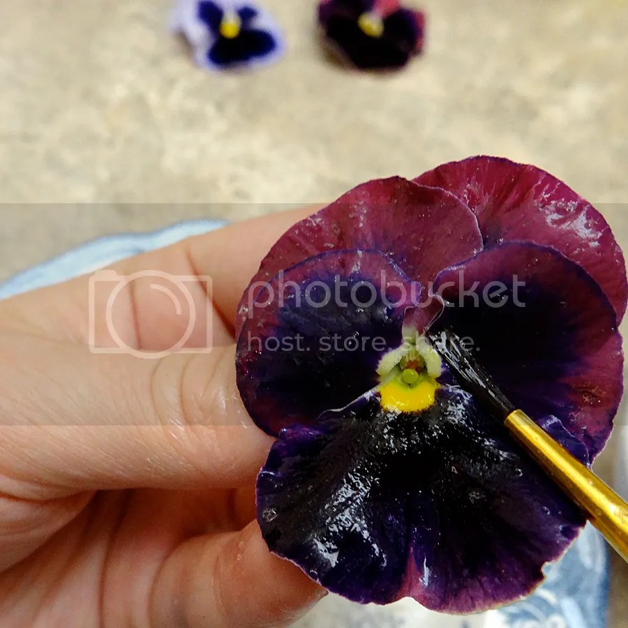 Front of pansy