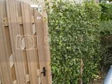 th_fallfowlfoliage09102012075_zpse8bb2be1.jpg