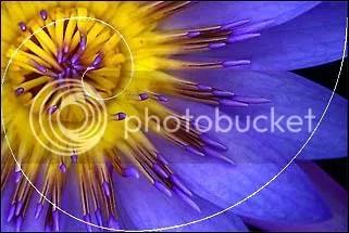 Bí ẩn Tỉ lệ Vàng Ф : Mật mã của vũ trụ - Phần 4 - www.toantrunghoc.com (Ảnh 26)