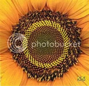 Bí ẩn Tỉ lệ vàng Ф, mật mã tạo thành vũ trụ - www.toantrunghoc.com (Ảnh 8)