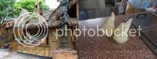 The Tiki Hut, Adventureland, Disneyland Park