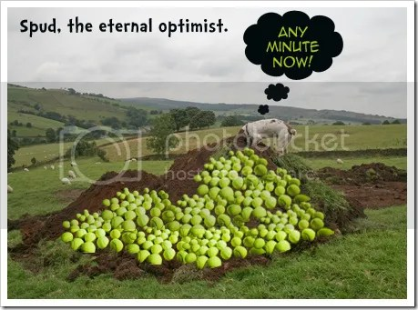 https://i1.wp.com/i1096.photobucket.com/albums/g324/Lesmore/spuddiggingtennisballs.jpg