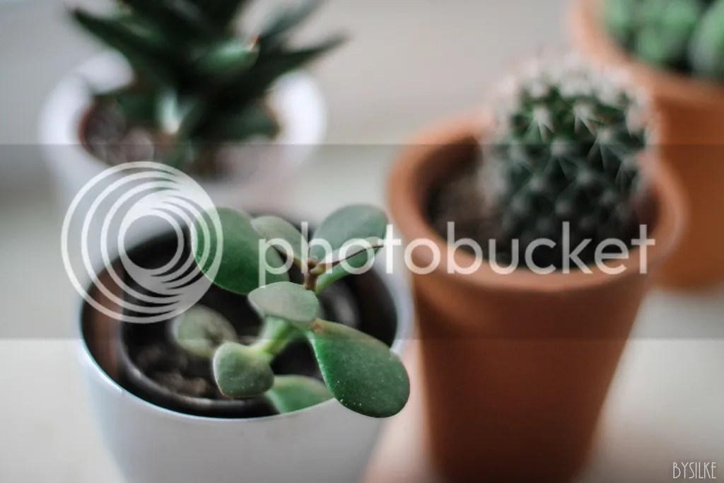 vetplantje