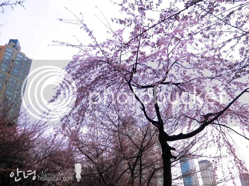 photo IMG_2207 copy_zpsplcxyehu.jpg