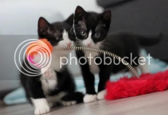 Pixel & Ayla Kittens