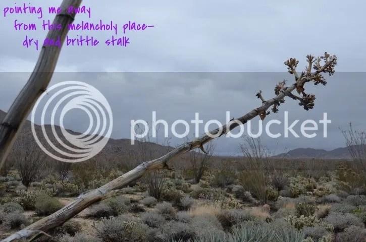 photo 9e8326f0-80dd-4f03-94e1-5d5694bb14f6_zpswd7s8thd.jpg