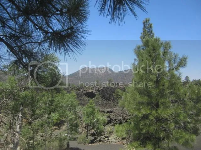 Sunset Crater NM photo Sunsetforest_zps843d4271.jpg