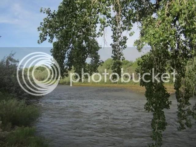 Animas River, Aztec photo AztecAnimascottonwoods_zpsba64b543.jpg