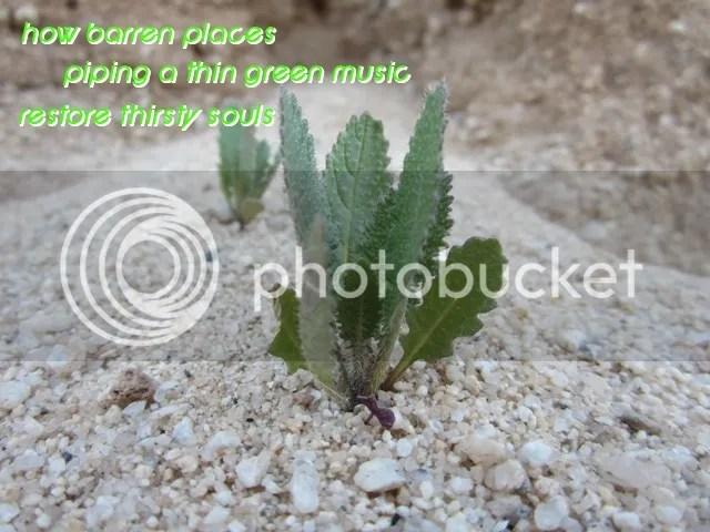 HAIGA.Thin green music photo 104cHAIGA_zps4f29c979.jpg