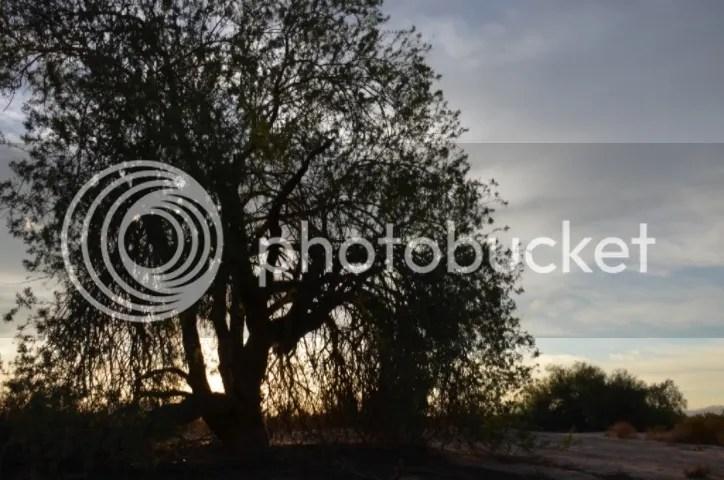 photo DSC_0174_zpsey5mc6nz.jpg