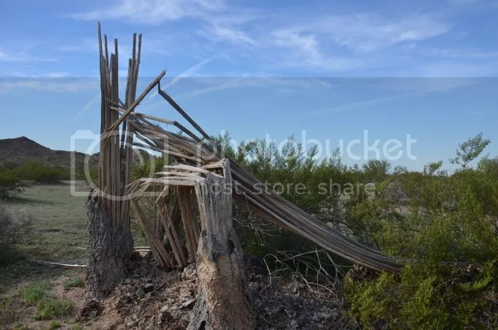 Maricopa County, broken saguaro photo Maricopabroken_zps95cb2c42.jpg