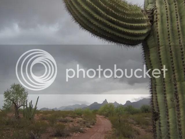 Organ Pipe Cactus NM photo OrganPipeAug2013309a_zps1c86bd45.jpg