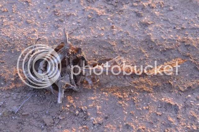 Catfish bones photo Sonoran.catbones_zps28zgg4tj.jpg