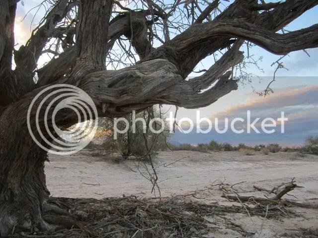 photo SonoranMar2013803a_zps99a31a68.jpg
