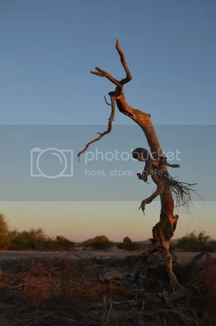photo Sonorantwisted_zps9f781c2b.jpg