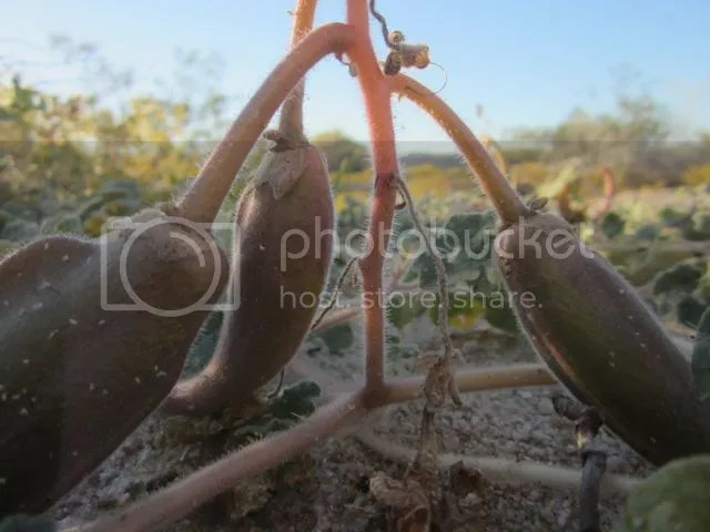 photo Unicornplantfruit_zpsd24f2d24.jpg