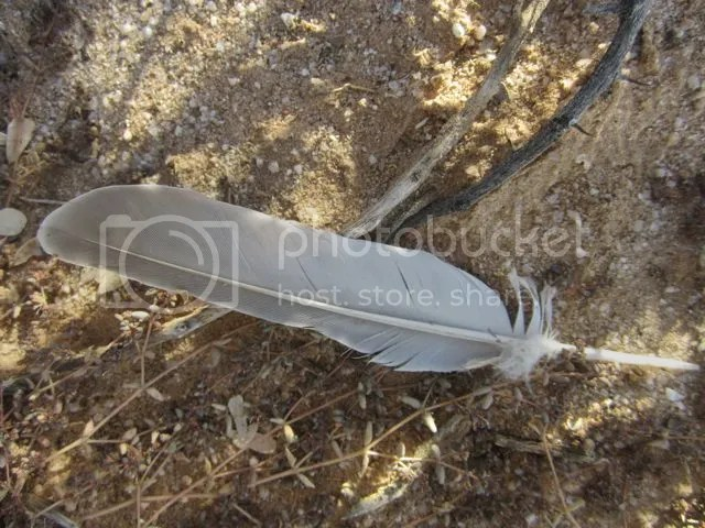 White feather photo Whitefeather_zps68e8fb28.jpg