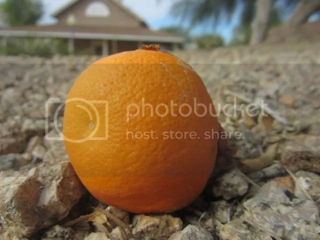 photo orangemacro_zpsf6acb4ba.jpg
