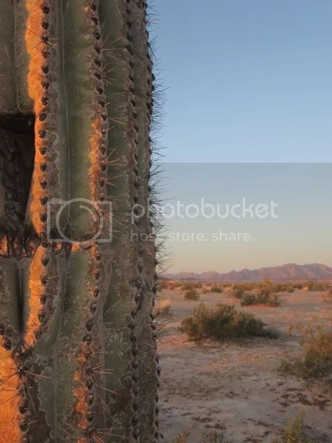 Saguaro at daybreak photo saguarodaybreak_zpsc876edde.jpg