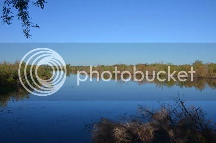photo Wetlandsstilllife_zpse7dfcc7b.jpg