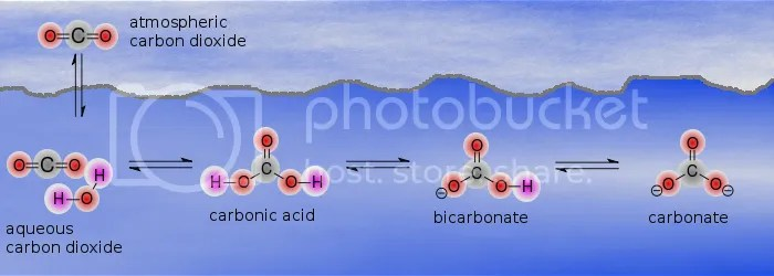 The carbonic acid / bicarbonate / carbonate buffer system.