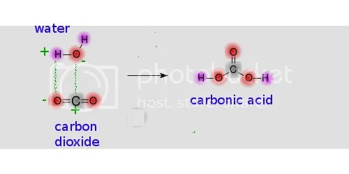 Carbon dioxide is acidic: reacting it with water produces carbonic acid.