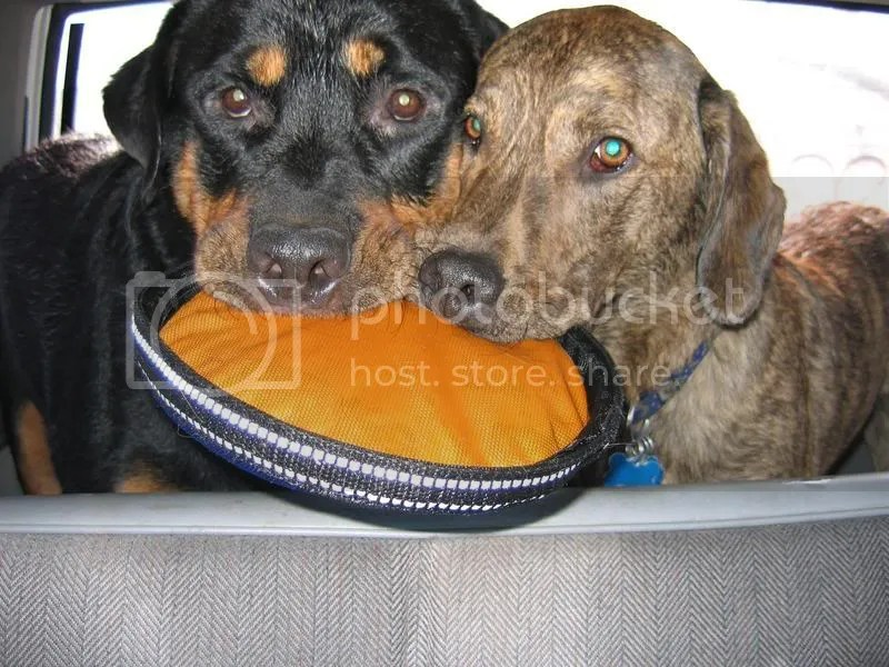 Sharing a Frisbee