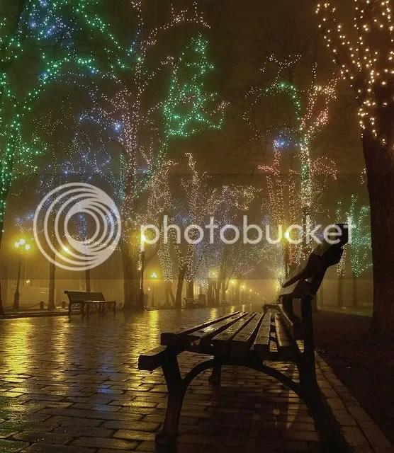 Tiny lights on Trees